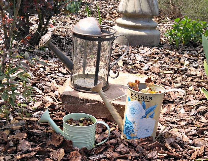 Watering cans make great garden planters. These were my mothers and really helped to transform my garden