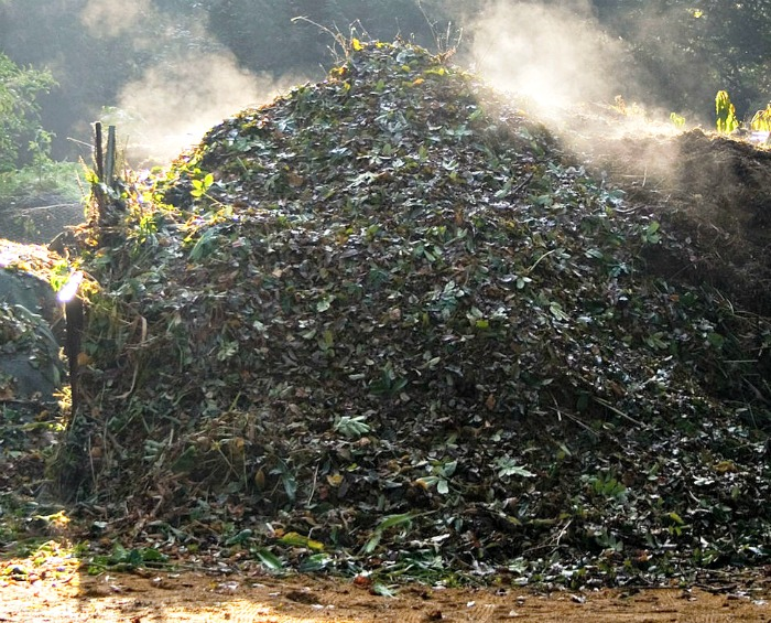 hot compost pile