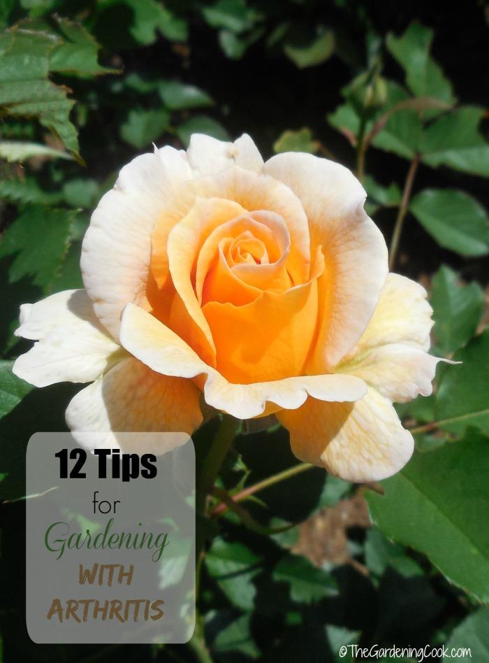 gardening-with-arthritis-her0