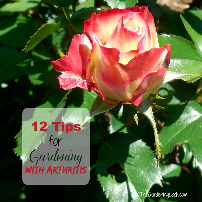 12 tips for gardening with arthritis
