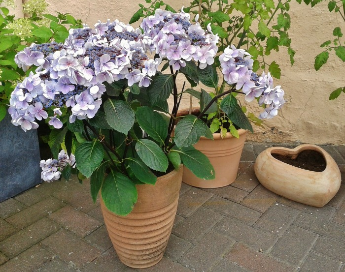 check garden pots in spring