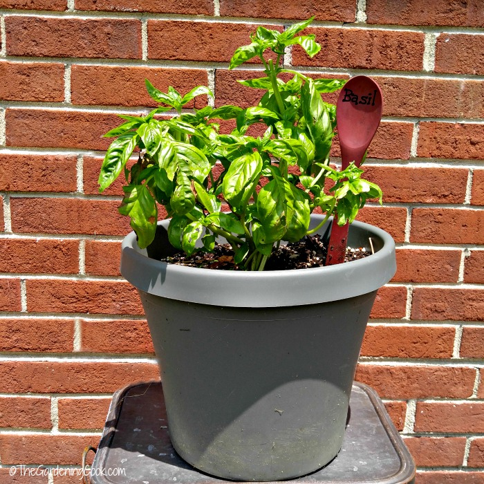 May 19 is Plant something day. Find out what other gardening days are celebrated in the Month of may on thegardeningcook.com #PlantSomething #MrsMeyersInspires #ad