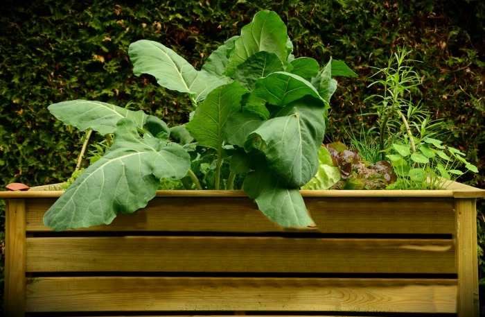 Raised garden beds are easy on the back