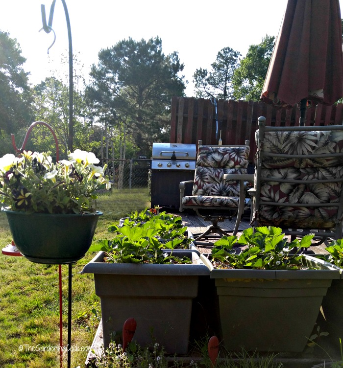 Use raised garden beds for pain free gardening.