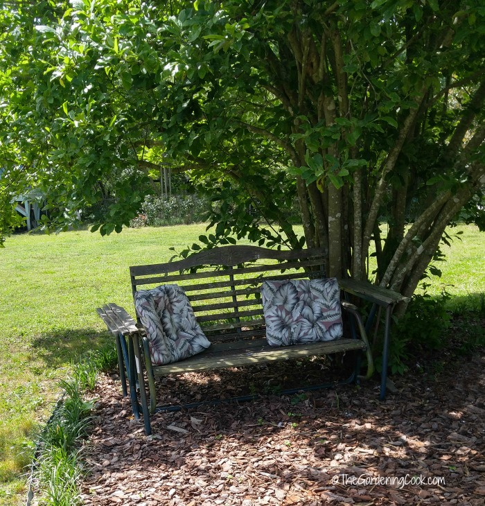 Garden bench slider and magnolia tree