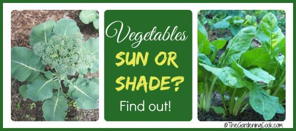 Shade Tolerant Vegetables vs Sun Friendly Veggies - The Gardening Cook