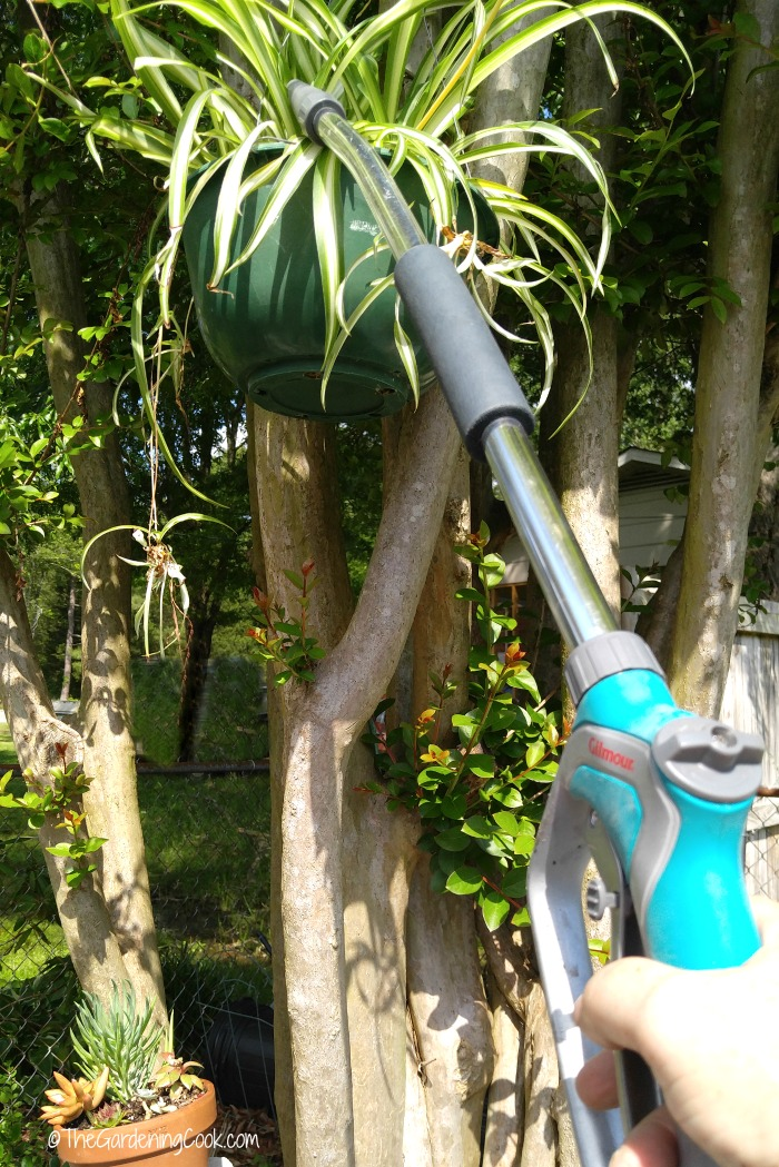 Use a watering wand for hard to reach pots
