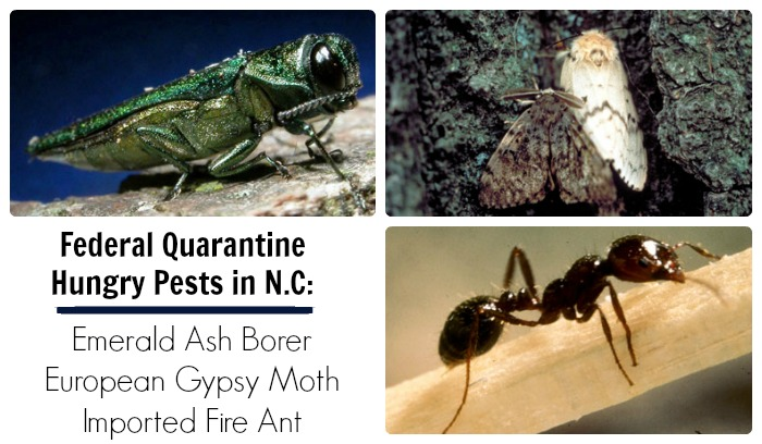 Hungry Pests Under Federal Quarantine in N.C..
