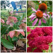 Best cold hardy perennials