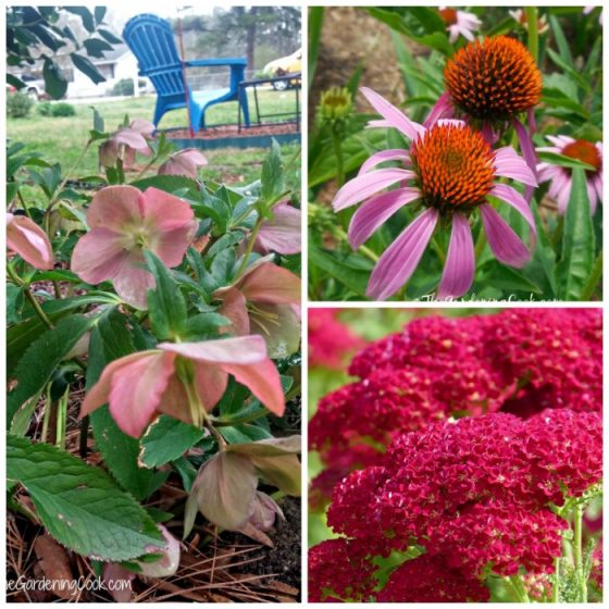 Hardy perennials my top 18 favorites the gardening cook mightylinksfo