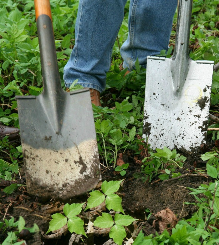 digging poison ivy is the best way to get rid of it.