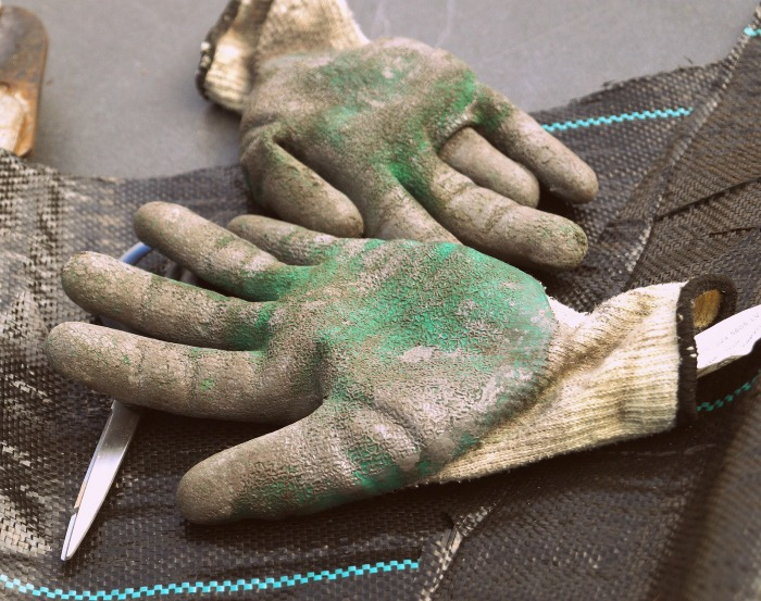 Clean clothing, gloves and tools after treating poison ivy