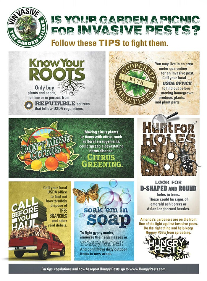Collages with tips for fighting invasive pasts.