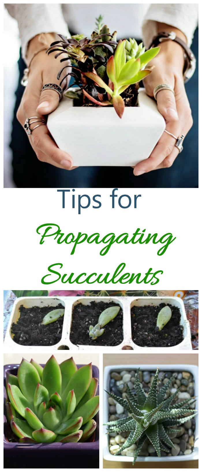 These Tips for propagating succulents will give you new plants for free in just weeks.