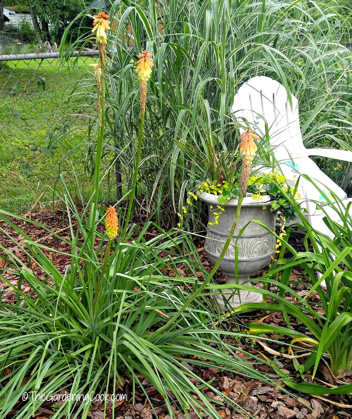 Red hot pokers give a Southwest look to a garden bed.