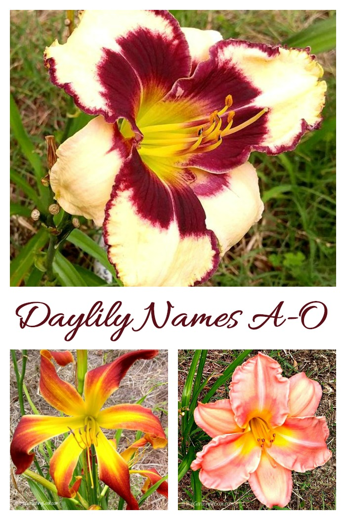 This collection of daylilies have names beginning with A through O
