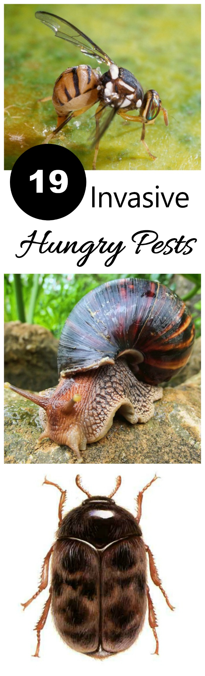 19 Invasive Hungry Pests that are a threat to our gardens.