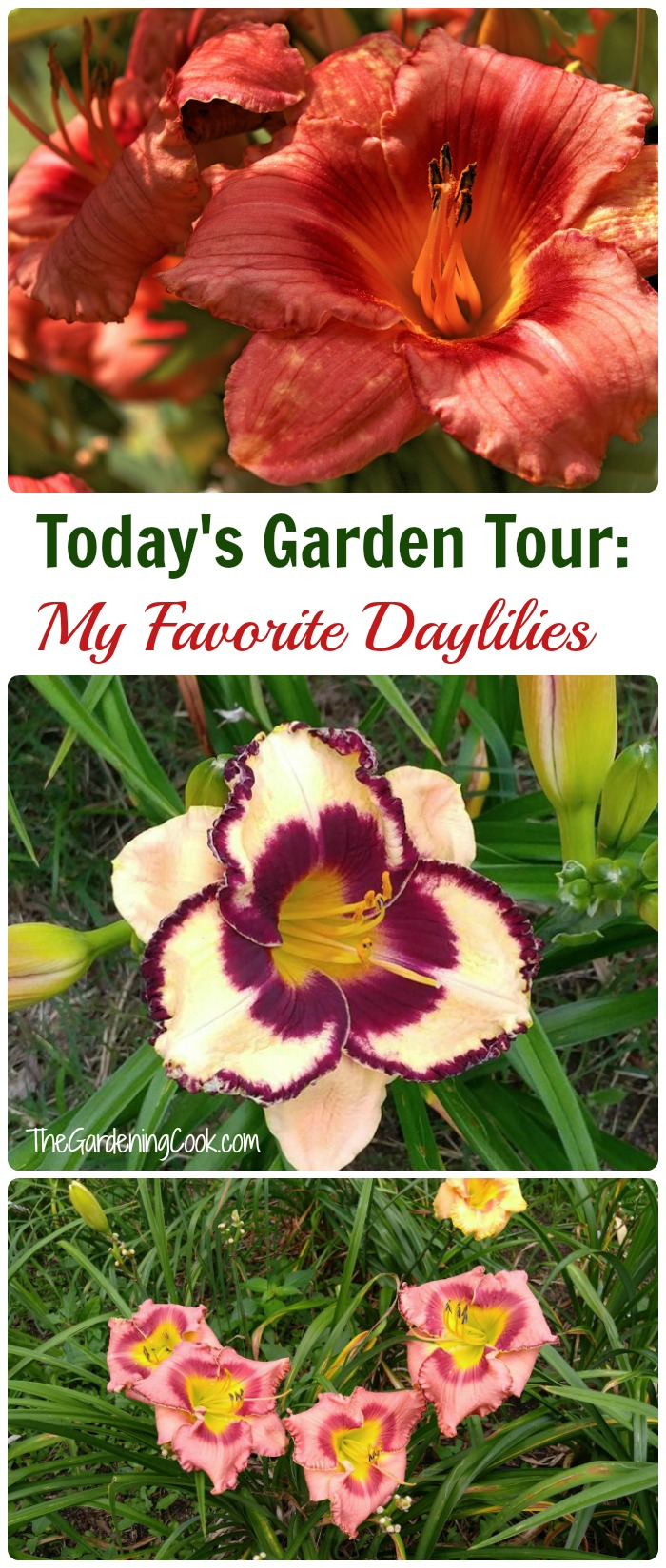 Totday's garden tour features a selection of my favorite daylilies.