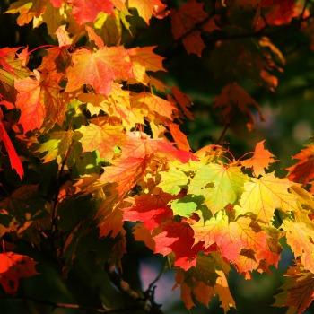 Autumn seasson