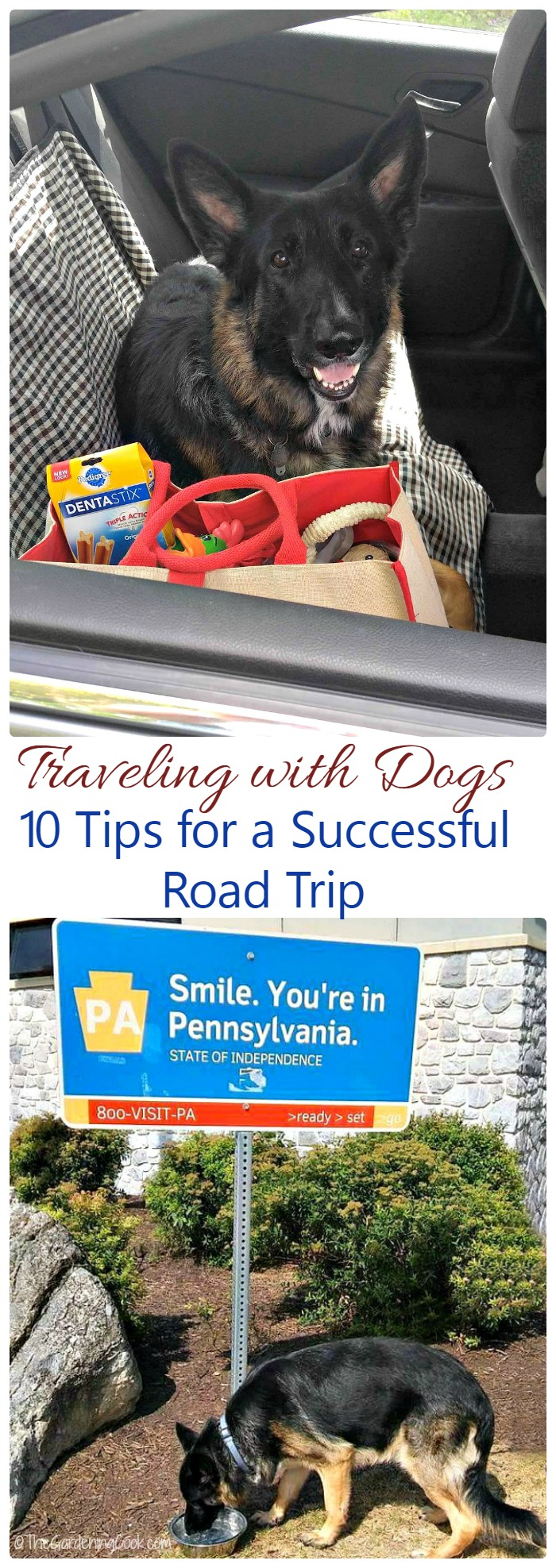 These 10 Tips for a Successful Dog Road Trip will make sure that y our family vacation with your four legged friend goes off without a hitch. thegardeningcook.com #RoadTripClose #DENTASTIX #ad