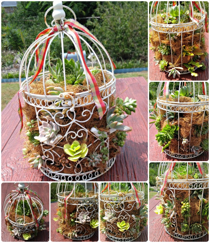 Collage for succulent-bird-cage-planter