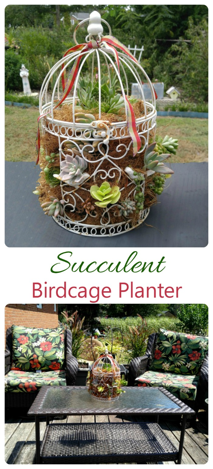 This succulent birdcage planter is super easy to put together and looks great on my patio table