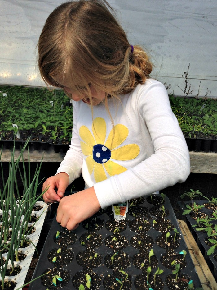 Teach children the joy of planting by letting them start by growing heirloom seeds.