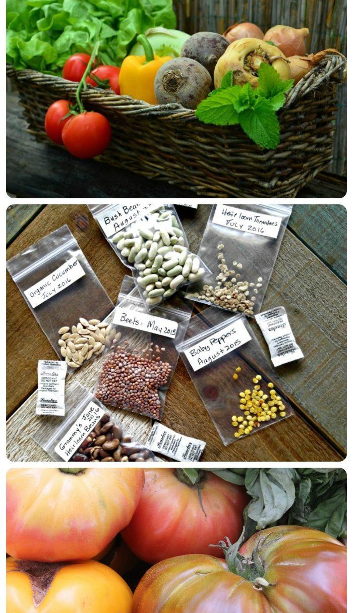 heirloom seed packages, basket of vegetables and heirloom tomatoes.