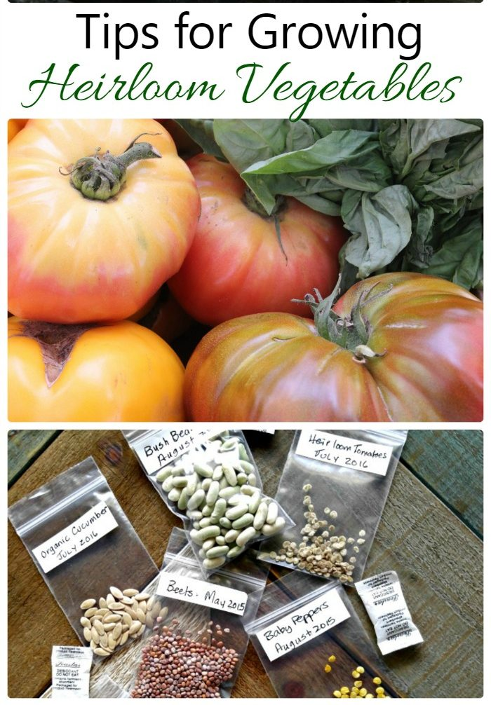 pumpkins and tomatoes with heirloom seed packages and text reading Tips for Growing Heirloom Vegetables.