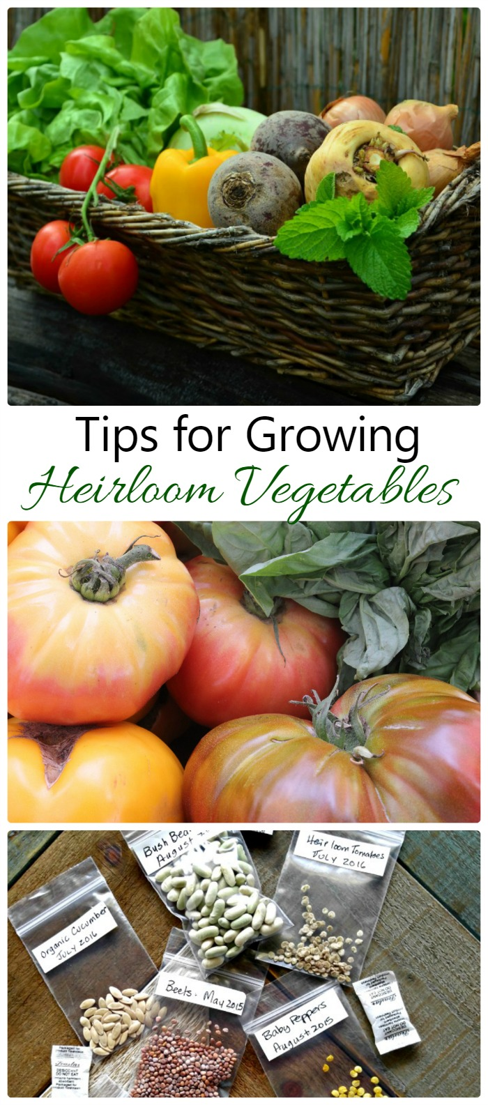 Heirloom vegetables are normally very hardy to a location and grow true to the parent plant. Find out about them and get some tips for growing heirloom seeds. thegardeningcook.com #ecofarmsonline #sponsored