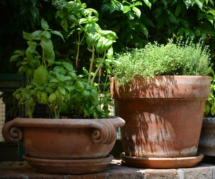 Herbs in lay pots