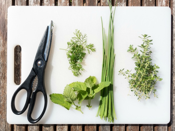 Cutting fresh herbs