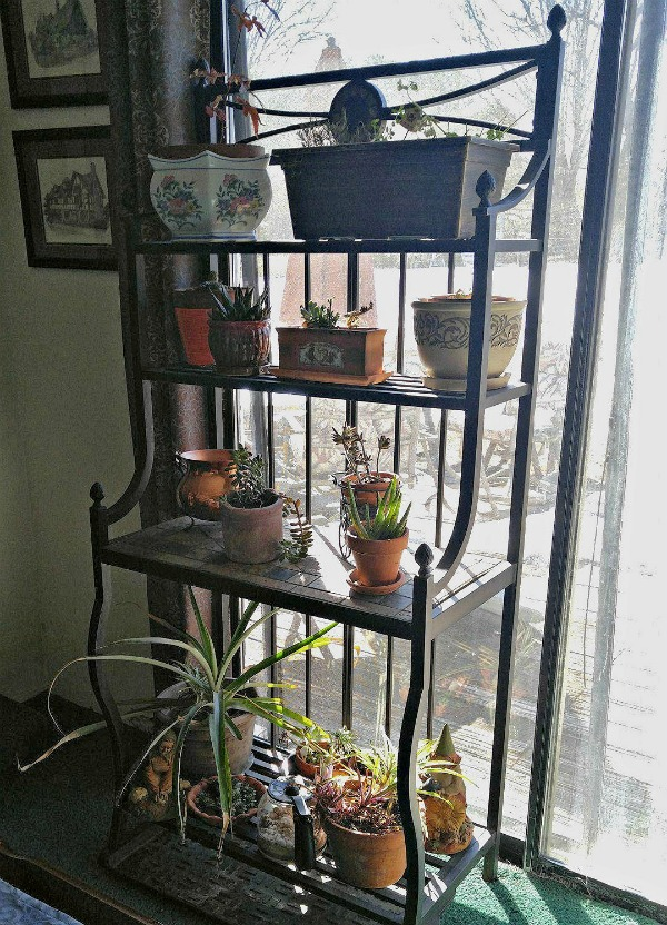 Winter plant care: Large plant stands hold a lot of indoor plants during the winter