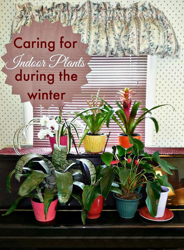 Tips for growing indoor plants during the winter