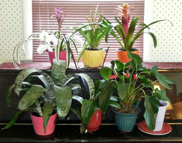 Winter House Plant Care Taking Care Of Indoor Plants