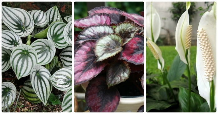 Low Light Indoor Plants - House Plants That Thrive in Lower Light