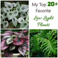 Plants for low light conditions