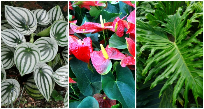 Varieties of Indoor plants and how to care for them.