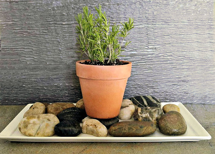A Pebble Tray Adds Humidity For Indoor Plants
