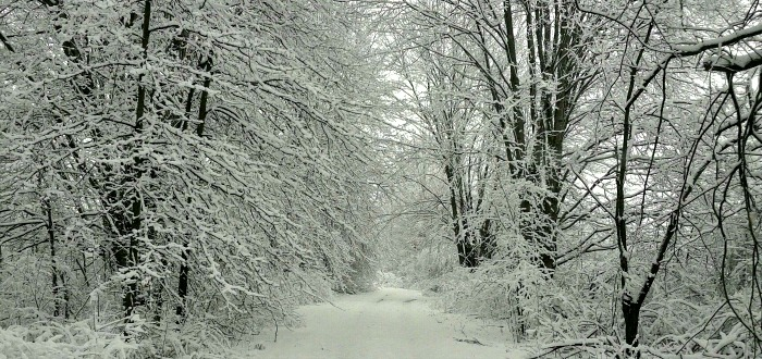 Winter wonderland scene in Southington Ohio