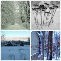 These winter garden views, from the USA, Canada and the UK show that there are some stark differences and lots of similarities when you look outside your window in winter. These photos are shared by readers of my blog. Why not share your photo too?