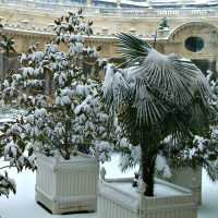 Gardening tips for Winter house plant Care