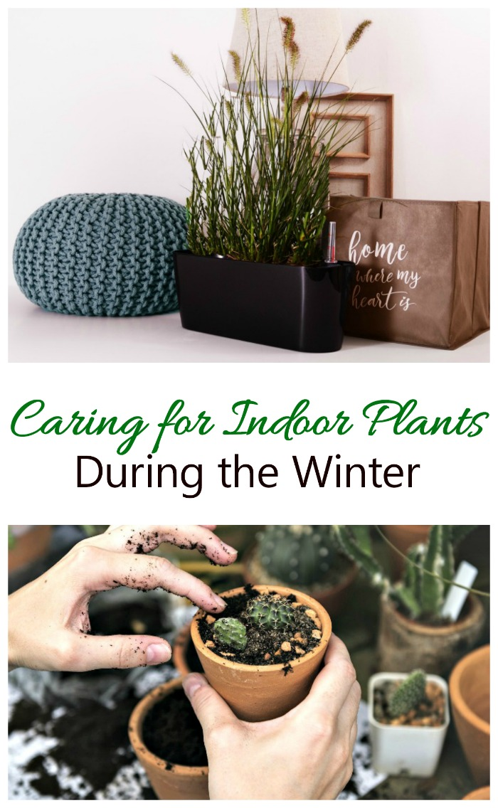 These tips for Winter house plant Care will make sure your indoor plants flourish all year long