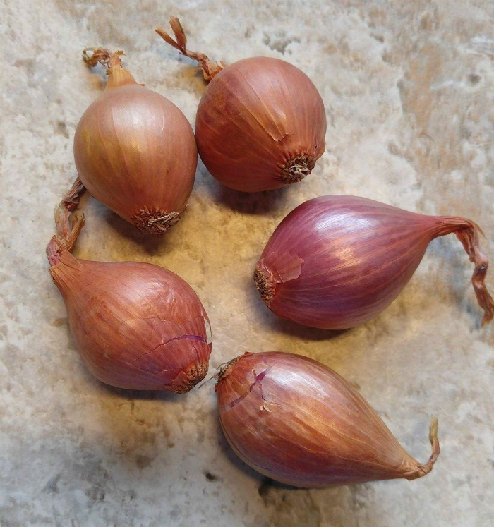A shallot comes in bptj tan and purple colors and in various sizes