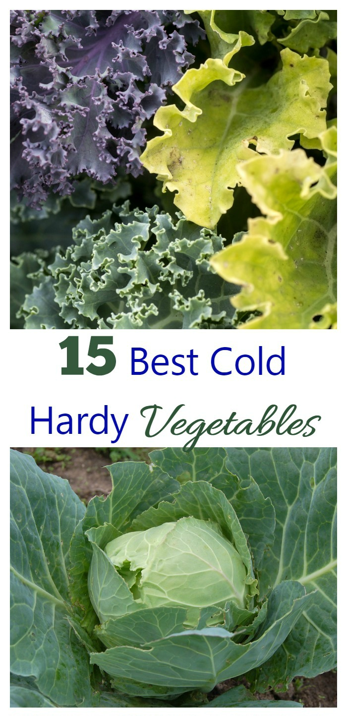 These 15 cold hardy vegetables can really take the cold weather in stride. Get a jump start on spring by getting them in the garden early.