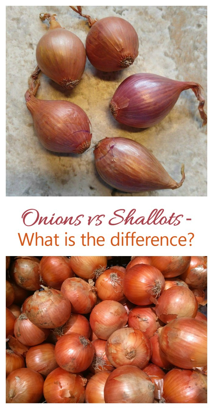What is the difference between a shallot and an onion? Size and taste!