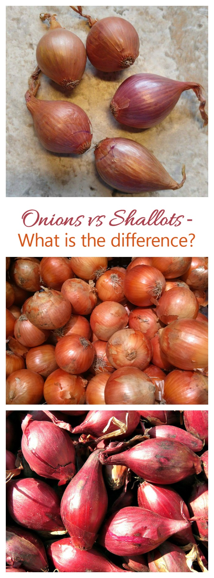 A Shallot has a milder taste than an onion does. It is also smaller and shaped differently. See how to choose, use, and store this vegetable.
