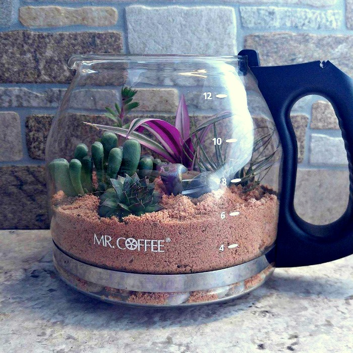 Coffee pot terrarium planted with succulents
