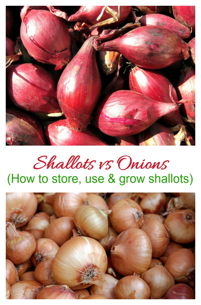 What are shallots? This guide to buying, storing and using shallots is a help for using this root vegetable. Also get some growing tips, too.