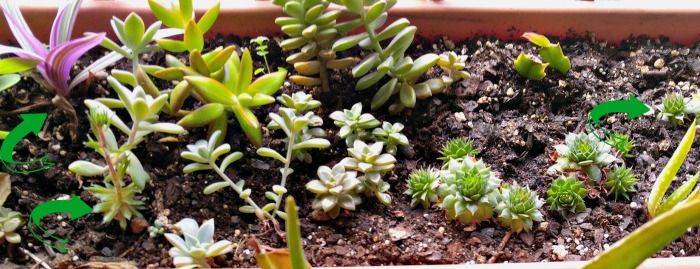 Succulents cuttings.